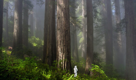 A tiny Imperial Stormtrooper stands among giant redwoods